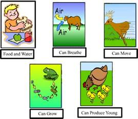 Characteristics of Non Living Things