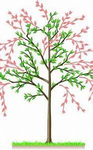 Avocado Pflanze Richtig Schneiden : brombeeren richtig schneiden garten gardens and balcony ~ Lizthompson.info Haus und Dekorationen