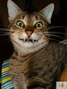 cats as emoticons barnorama