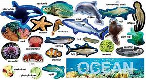 Image Gallery ocean plants and animals