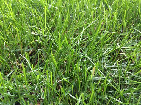 Wann Rasen Das Erste Mal Mähen by Rasen M 228 Hen Rasen Experte