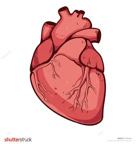 Real Heart Illustration