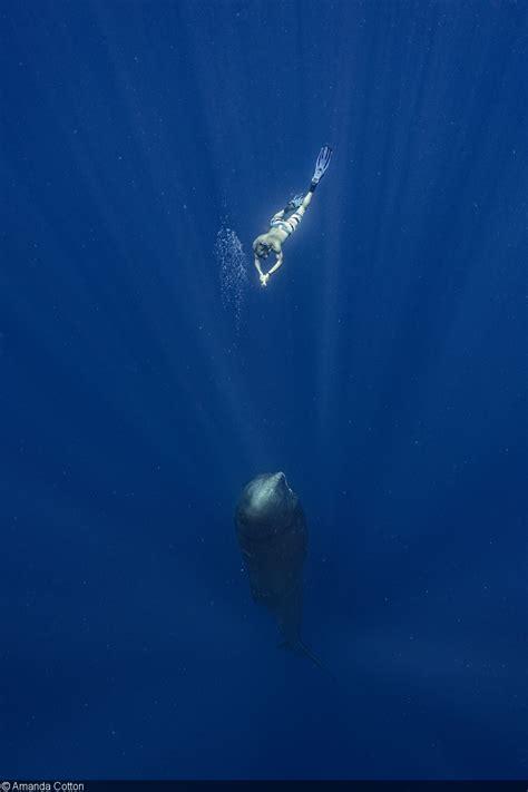 sperm whales   fantasea frx iii