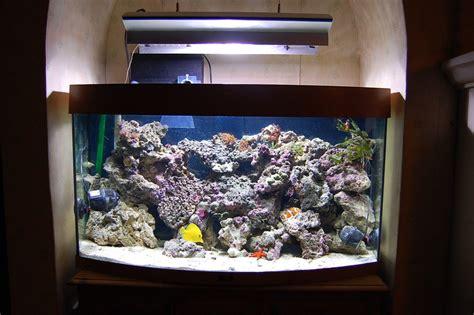 beautiful saltwater fish tanks  time