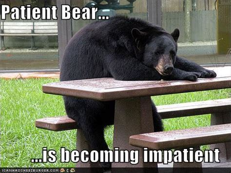 Patient Bear Meme - patient bear is losing patience with your shenanigans patient bear know your meme