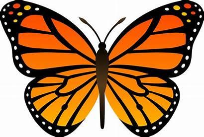 Butterfly Butterflies Orange Freepngimg Icon 2617