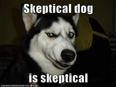Skeptical Hippo Meme - image gallery skeptical meme
