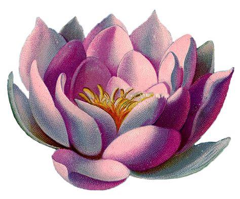 Amazingly Beautiful Pink Water Lily