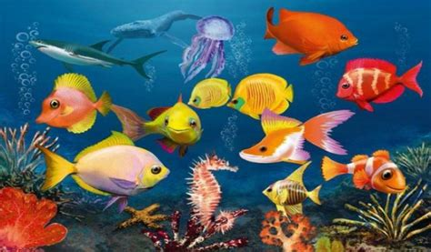 Animated Underwater Wallpaper - moving underwater wallpaper wallpapersafari