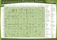 vegetable garden plant pairings chart gardening for dummies companion planting free printable