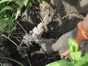 Wann Johannisbeeren Pflanzen : obstgeh lze hegen und pflegen schwarze johannisbeere pflanzen erleb bar ~ Orissabook.com Haus und Dekorationen