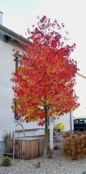 succulent centerpieces amberbaum garten