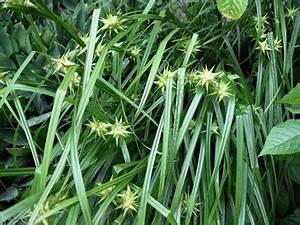 Winterharte Kübelpflanzen Schattig : beliebte winterharte k belpflanzen tipps zum anbau wachstum ~ Michelbontemps.com Haus und Dekorationen