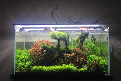 Ada Aquascape by Nature S Reach Ada 90p Aquascape Plantedtank