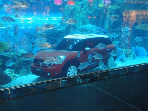 aquarium hotel in dubai dubai aquarium picture of dubai aquarium underwater zoo dubai tripadvisor