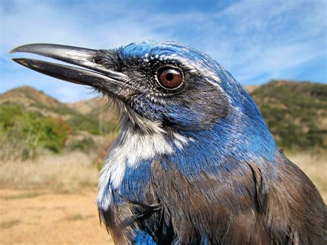 this jay is evolving in a very very weird way wired