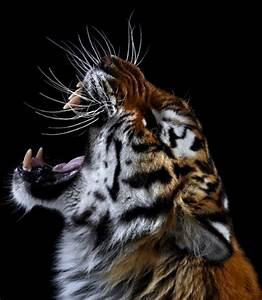 Photos of Wild Animals Captured from Just a Few Feet Away ...