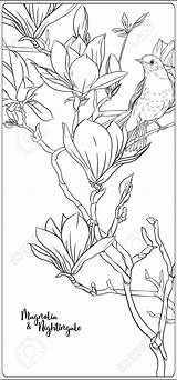 Coloring Magnolia Tree Branch Adult Flowers Nightingale Drawing Outline Shareasale sketch template