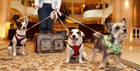 pet friendly hotels and resorts across the u s hotels