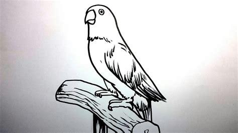 menggambar burung lovebird  mudah youtube