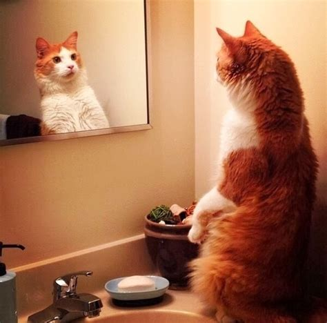 Image result for cat mirror