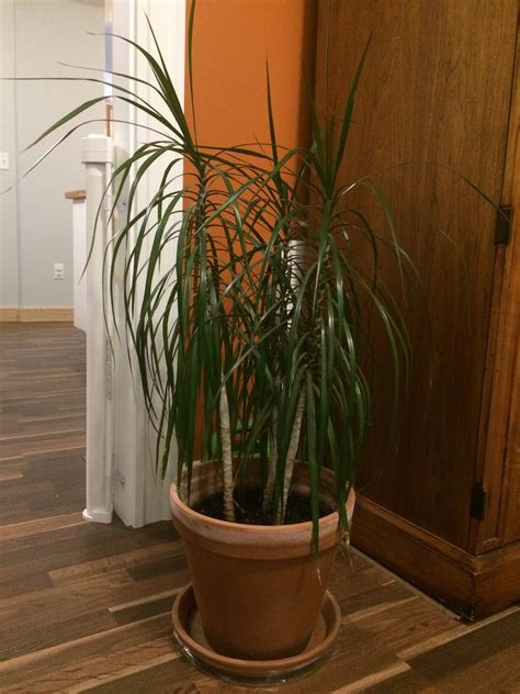 best house plants identification identify houseplant with stem and