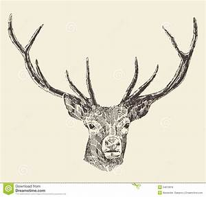 Deer Head Vintage Illustration, Hand Drawn, Vector Stock ...