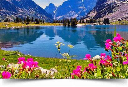 Nature Amazing Places Mountain Spring Lake Flowers