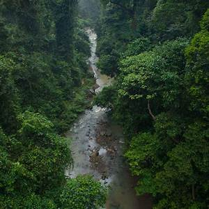 Visit Danum Valley Field Center | Sabah, Borneo