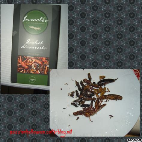 insecte de cuisine cuisine insectes