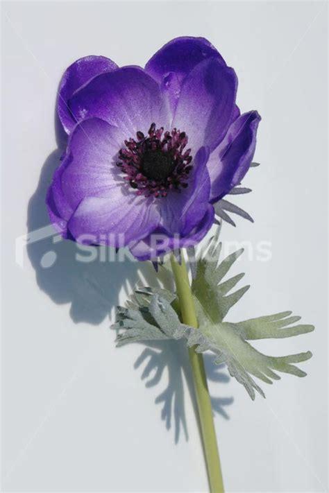 Purple Anemone Fresh Flower