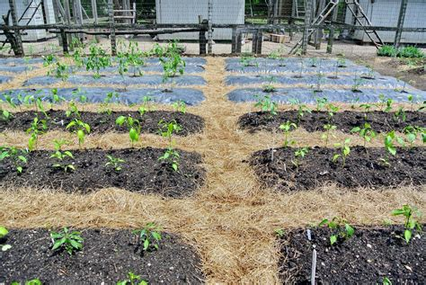 best compost for vegetable garden mulching composting and repurposing at the farm the