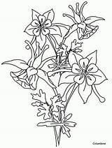 Flower Coloring Columbine Pages Drawing Visit Hummingbirds Flowers sketch template