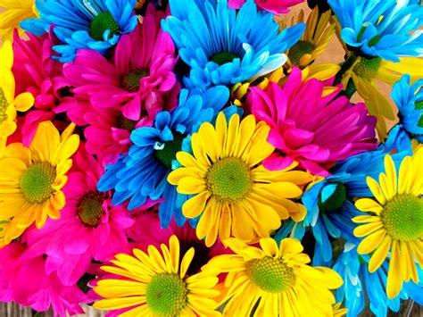 Imágenes De Flores De Colores Wallpaper Hd 4 HD