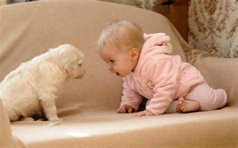 baby puppies top 10 baby and puppy pictures