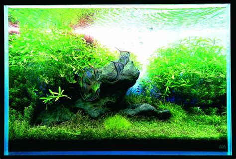 Setting Aquascape by How To Set Up Simple Aquascape With Iwagumi Style Aquascaper