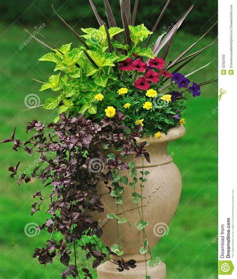 Container Gardening Stock Photo  Image 32392300