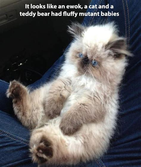Attack Of The Funny Animals  40 Pics