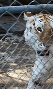 Prison or home to animals - a deeper dive into Karachi Zoo