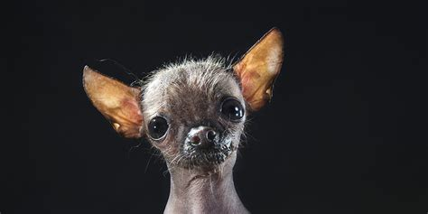 Hairless Dogs Photo Series Brings Attention To Ethical ...