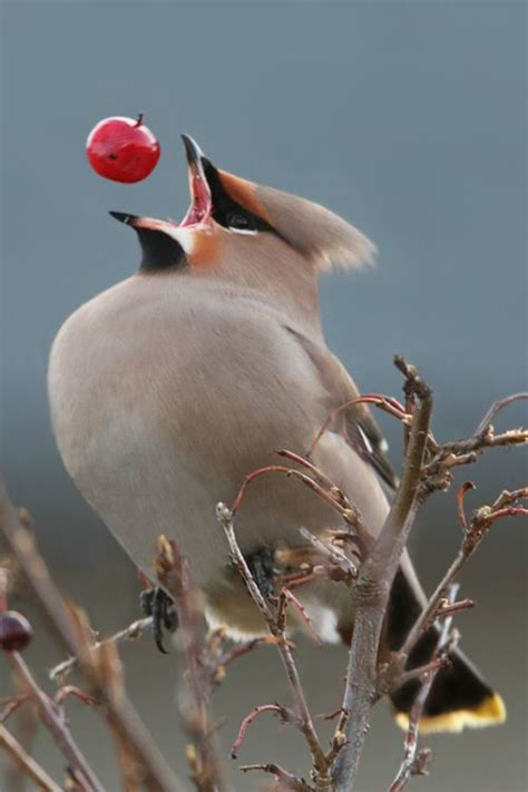 25 Best Ideas About Exotic Birds On Pinterest Pretty