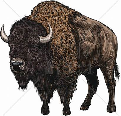 Bison Stockunlimited Graphic