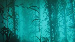 Ocean nature fish plants lakes algae underwater wallpaper ...
