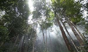 APP calls on stakeholders to help protect Indonesia's forests