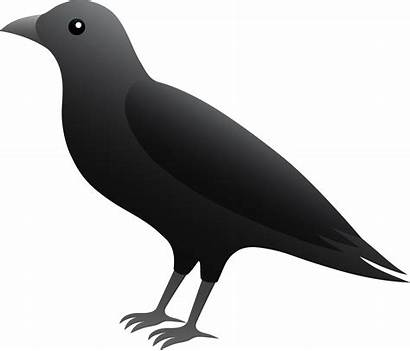 Crow Clipart Clip Crows Blackbird Cliparts Drawings
