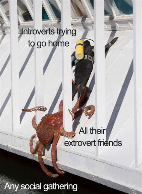 introvert memes     insiders  pics