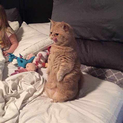 Cat Standing On Two Feet by George Le Chat Qui Vit Sur Ses Deux Pattes Arri 232 Res