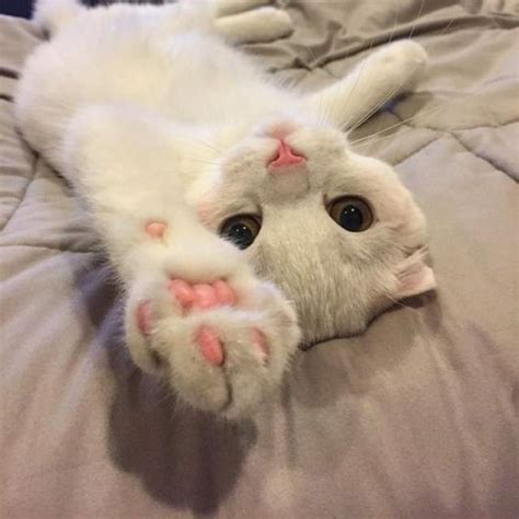 Funny Cats  Part 267 (40 Pics + 10 Gifs)  Amazing Creatures