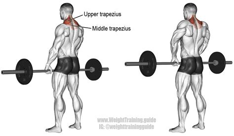 weight plate rack barbell shrug exercise and weight