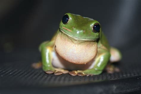garden grass for sale how do frogs jump popular science